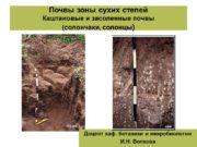 Почвы зоны сухих степей Каштановые и засоленные почвы