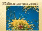 Вынашивание плода с полным набором чужеродных антигенов в