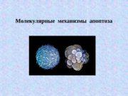 Молекулярные механизмы апоптоза   « Апоптоз –