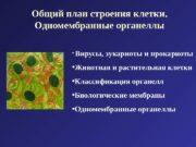 Общий план строения клетки.  Одномембранные органеллы