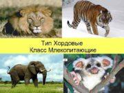 Тип Хордовые Класс Млекопитающие