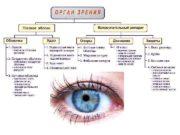 Глаз. Вес глаза 7 -8 г, диаметр глазного