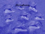 Дельфины  Дельфины не рыбы,  а млекопитающие.