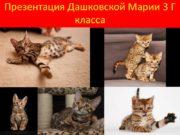 Презентация Дашковской Марии 3 Г класса Опрос Мнения