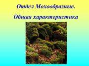 Отдел Мохообразные. Общая характеристика  Общая характеристика мохообразных