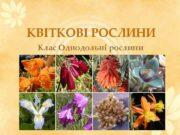 КВІТКОВІ РОСЛИНИ Клас Однодольні рослини   Мета