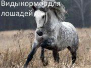 Виды кормов для лошадей