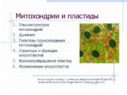 Митохондрии и пластиды 1. Ультраструктура митохондрий 2.