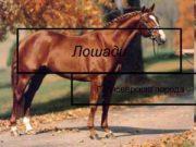 Лошади  Ганноверская порода