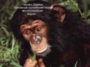 Чарльз Дарвин. Основные положения теории происхождения видов.