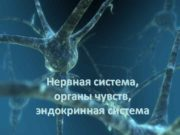 Нервная система, органы чувств, эндокринная система  Спинной