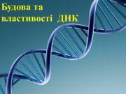 Будова та властивості ДНК Докази генетичної функції ДНК