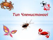 Тип Членистоногі Членистоногі Тип Членистоногі Членистоногі (Arthropoda) –