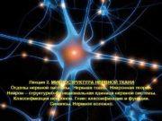 Лекция 2. МИКРОСТРУКТУРА НЕРВНОЙ ТКАНИ Отделы нервной системы.