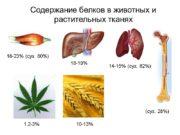 Содержание белков в животных и растительных тканях 18-23%