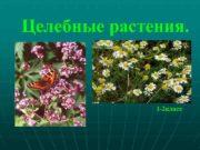Целебные растения. 1 -2 класс  Цели и
