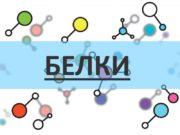 БЕЛКИ ПЛАН Состав и строение белка Уровни организации