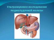 Ультразвуковое исследование поджелудочной железы  Анатомия поджелудочной железы