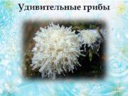 Удивительные грибы  Плесень  Плесень  Плесень