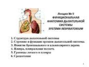 Лекция № 9 ФУНКЦИОНАЛЬНАЯ АНАТОМИЯ ДЫХАТЕЛЬНОЙ СИСТЕМЫ SYSTEMA