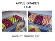 APPLE GRADES FUJI UNIFRUTTI TRADERS 2007 FUJI 01(