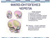 ФИЛО-ОНТОГЕНЕЗ ЧЕРЕПА План лекции 1. Отделы черепа.