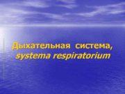 Дыхательная система, systema respiratorium  Функции дыхательной системы: