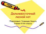 Дальневосточный лесной кот Подготовил Тулинцев Никита Ученик 4