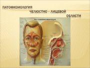 Патофизиология Челюстно – лицевой области Характеристика микрофлоры полости