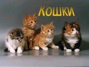 Кошки Абиссинская короткошерстная кошка Американский кёрл Бенгальская кошка