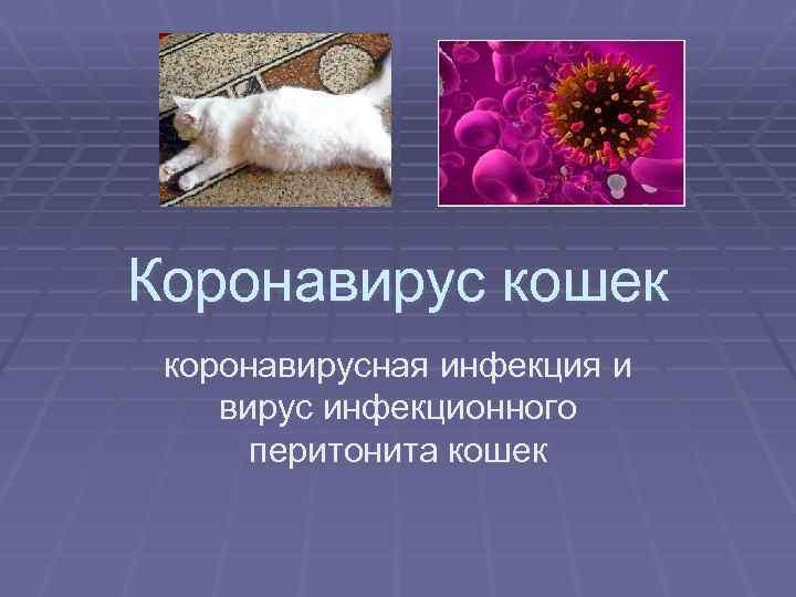 коронавирус кошек коронавирусная инфекция и вирус