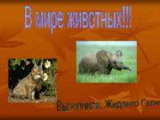 n Живо тные лат Animalia или Me tazoa