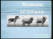 Методы селекции Селекция наука о методах