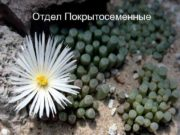 Отдел Покрытосеменные Цветок жимолости Цветок венериной мухоловки