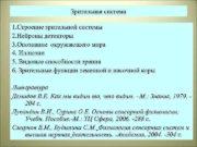 Зрительная система 1 Строение зрительной системы 2 Нейроны