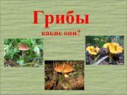 Грибы какие они Белый гриб боровик Вот