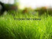 Устройство газона Правила для выбора места посадки