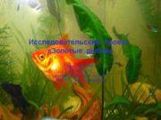 Исследовательский проект «Золотые рыбки» Автор проекта: Авилова С.Ю.