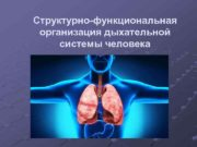 Структурно-функциональная организация дыхательной системы человека Цель и