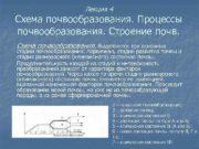 Лекция 4 Схема почвообразования Процессы почвообразования Строение почв