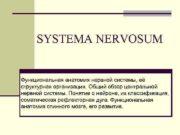 SYSTEMA NERVOSUM Функциональная анатомия нервной системы её структурная