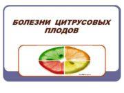 БОЛЕЗНИ ЦИТРУСОВЫХ ПЛОДОВ Мембраноз Болезнь поражает плоды