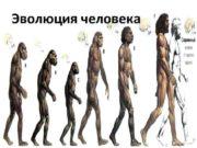 Эволюция человека Эволюция человека Австралопитек Человек умелый