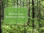 Хвойные леса Восточной Сибири р Лена