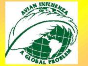 Вспышки высокопатогенного гриппа птиц в мире в 1994