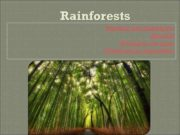 Rainforests Reading and translation Animals Writing in the