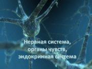 Нервная система органы чувств эндокринная система Спинной