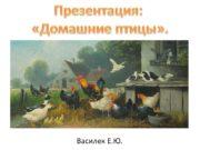 Василек Е.Ю. Презентация: «Домашние птицы». Домашние птицы Домашние