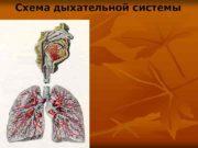 Схема дыхательной системы Функции дыхательной системы Основные