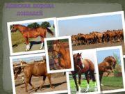 Донская порода лошадей Лошади, чья порода строилась десятилетиями,